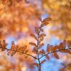 晩秋のメタセコイア並木:富山県総合運動公園