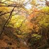 長石谷の紅葉