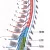 腰椎三番の心理