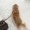 広島は大雪です!愛犬の散歩にいくと、愛犬が大変なことに!!