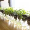 【脱力系農業】初心者でも育つ野菜、育たない野菜