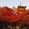 京都の紅葉 〜高台寺・清水寺〜