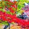 京都 紅葉  車での巡り方
