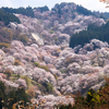 奈良県の桜名所ランキング!ベスト5を紹介。全部、実際に行ってきた場所ばかりです。