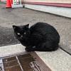 福を呼ぶ黒猫