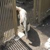 公園の一角にある以外と充実した動物園、江戸川区自然動物園
