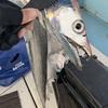 【釣果報告】釣り初め太刀魚リベンジ