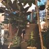 【二子玉川のソルソホーム】全部オシャレな観葉植物屋さんの話。