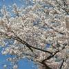 """2019-04-22 """"春""""が過ぎた先にはGW"""