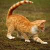 猫の体調は尻尾で見抜ける!付け根を触ると痛がるのはこんな理由