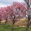 春の陽気に誘われて  陽光桜を目一杯楽しんだ一日