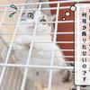 猫雑記 ~二匹の帰省②~