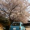 桜ももう終わりですね