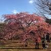 代々木公園 欧米人には天国 日本人にはカオス