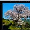 無料アプリ「Photoshop Express」のカラー補正機能を試す。納戸料の百年桜で。