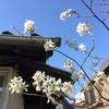 泰然と進む春の庭時間