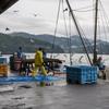 2020年10月17日 小浜漁港 お魚情報