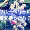 【狛江】とみなが農園でブルーベーリーつみ!極上の狛江産ハチミツも買えるよ