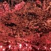 鶴舞公園で2018お花見!桜の見頃と混雑状況、何時から場所取りしようか【3月28日追記】