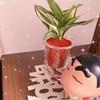 new 観葉植物