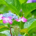 真行寺りえのブログ