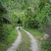 ちょっと道草 210326 写真で Go to西表島(10 猪 牛 鷺 蛇 青鳩からシルクロードへ