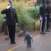 准将に昇進したペンギン、ノルウェー軍近衛部隊のニルス・オーラヴ3世に敬礼っす!