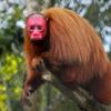 大アマゾン ~猿、さる、サル~