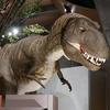 群馬県立自然史博物館|大迫力の恐竜・化石は大人でも楽しめた:群馬県富岡市