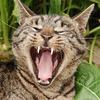 人間以外みんな猫舌でしょって話