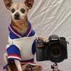 """愛犬を""""撮って""""みよう♪"""