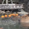 温泉に浸かるカピバラさん。キツネザルとも遊べる!伊豆シャボテン公園は最高に楽しかった