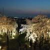 山崎の霞立つ桜とどめなく