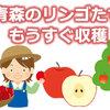 もうすぐ収穫 青森のリンゴたち
