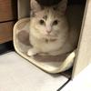 ニトリで見つけた【パピタ】が猫にぴったりな件
