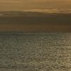 青物のボイル・鳥山に…頭チンチンっ!伊勢湾サーフ・ショアジギング