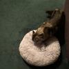 マシュマロ猫お布団なるもの