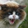 一発撃退!花壇に野良猫が近づかない裏ワザはコレだった