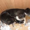 豆柴犬ユズが難産で無事生まれたのは一匹だけでした