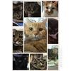 我家の猫たち大好き!!