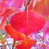 秋の葉の色の変化