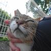 7月後半の #ねこ #cat #猫 その3