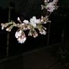 仲春の千鳥ヶ淵を歩く: 東京夜散歩
