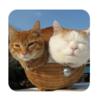 【猫好き必見!】癒やしと和みのゲームアプリ『のせて のせ猫』