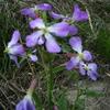 3月14日誕生日の花と花言葉