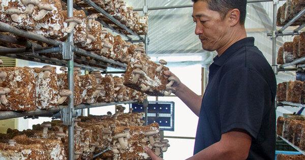 『ザ!鉄腕!DASH!!』の影響で注文半年待ちも。八丈島の椎茸を全国へ