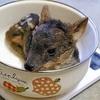 体長20センチ、世界最小のシカの赤ちゃん誕生