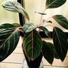 最近の植物達 パート1