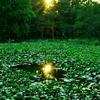 霊池に映る日