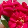 ミニバラのミニチュア花束♡